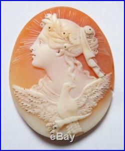Superbe camée sur coquillage Bijou ancien 19e siècle cameo Victoire Paix Colombe